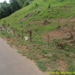 É muito comum observar os entulhos e galhos acumulados nas cercas ao longo da rodovia